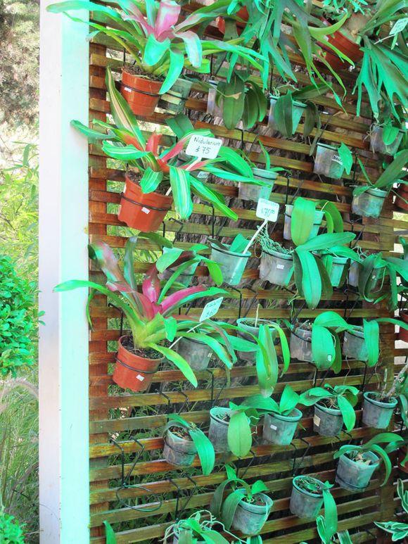 Viernes descuento marcelina for Jardines en lata